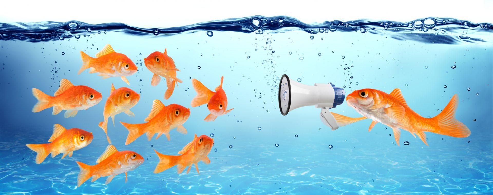 Formazione web e social media marketing